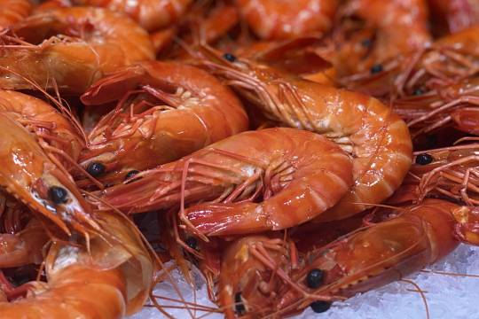 Jumbo whole tiger prawns