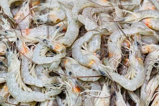 Australian green school prawns